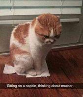 50 Cat Memes machen heute 100% lustiger – #heute #lustiger #machen #memes – #new