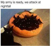 29 Tier-Meme, die Sie garantiert zum Kichern bringen –   – Katzen