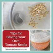 Tipps zum Speichern Ihrer eigenen Tomatensamen   – Gardening ideas