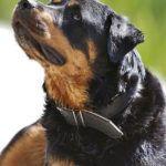 Pin Von Hannelore Borgens Auf Shop Pets4homes Mustangs Tierheim Tiere Hunde Haus