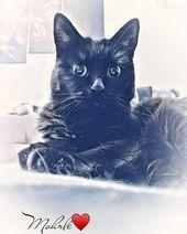Hexenkatze … #mohrle #miau #kitty cat #kitty love #katzitatzi