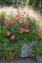 Container Gardening: Sarah Raven's 7 Ideas for Good Flower Pots
