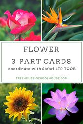 Free Printable 3-Part Cards Flowers