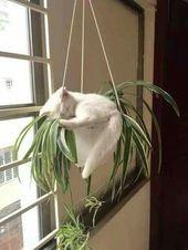 Schlafende Katze in Blumenampel