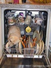How To Troubleshoot A Maytag Dishwasher Not Filling With Water Funny Dog Pictures Funny Animal Pictures Funny Animals