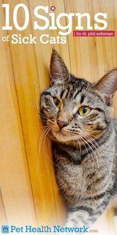 So erkennen Sie, ob Ihre Katze #geheim #krank ist
