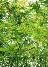 1art1 40531 Pflanzen Bambus 4 Teilig Fototapete Poster Tapete 254 X 183 Cm Mural De Jardin Fotomural Murales Pared