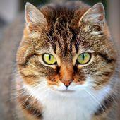 #cat #cats #kitten #kittens #animals #animal  – cats