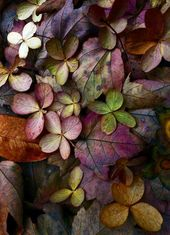 Autumn mood-leaves