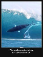 Wenn schon surfen, dann nur in Gesellschaft.. | Lustige Bilder, Sprüche, Witze,…