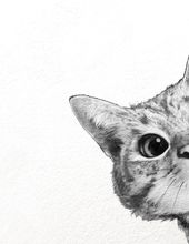 «sneaky cat» Canvas Print by Laura Graves – Numbered Edition from $59  – Bilder