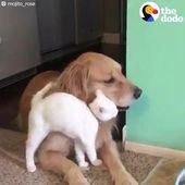 arte caprichoso del perro, perritos divertidos del perro, arte colorido del perro, caras divertidas del perro #dogfunnyhi …