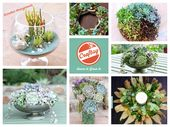 HOW2 Create Stunning Succulent Arrangements