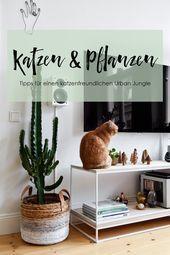 Katzen Und Pflanzen In Einer Wohnung Geht Das Uberhaupt Succulentes Tige