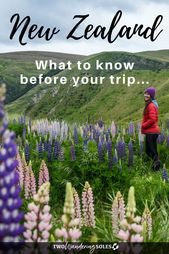 54 Things to Know Before Traveling in New Zealand
