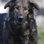 Pin Von Sara Bri Auf Shop Pets4homes Mustangs Tierheim Tiere Hunde
