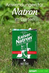 6 clevere Anwendungen für Natron im Garten