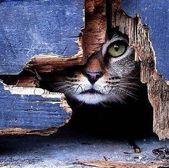Katzen Fotografie