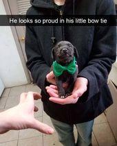 32 weitere Good Boy Dog-Meme, die Ihnen helfen, Ihren Tag zum Lachen zu bringen