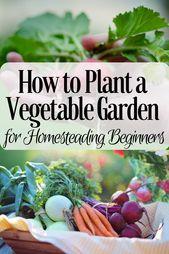 Wie man einen Gemüsegarten für Homesteading-Anfänger anlegt- # Anfänger #Garten #H …   – Garden