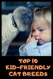 Top 10 Kid-Friendly Cat Breeds – Cat Care