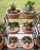 Cible, je veux plus de ces planteurs roses! #succiepotinapot #succulents #succul …   – Super Succulents