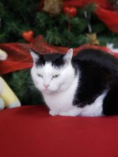 Say Hello To Perdita She Is A Cat Living At The Mitchell County Animal Rescue I Cats Animal Cat Cats County Living Mitchell Perdita Rescue 2020
