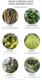 Was ist los mit deiner Zimmerpflanze? 6 häufige Probleme