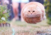 26 lustige Katzenbilder zur richtigen Zeit