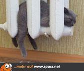 Tiere – Lustige Bilder auf Spass.net