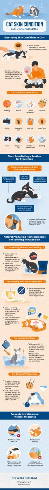 Katzenhauterkrankungen und natürliche Heilmittel