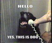 LOL SO TRUE Dog Memes videos
