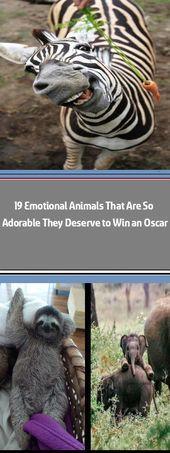 Die 30 glücklichsten Tiere der Welt, die Sie zum Lächeln bringen Das Internet kann …
