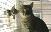Ces bébés chats posent à côté de leur maman et c'est cute !