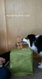 Das ist wirklich ein erstaunlicher Hund. Sie kennt sich mit Physik aus und hat das Spiel selbst verstanden.