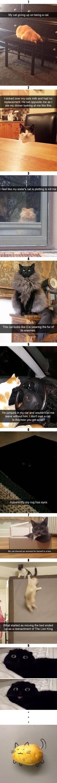 Hier sind ein paar lustige Cates für den Fall, dass du einen schlechten Tag hast   – Katzen Bilder