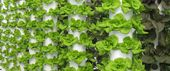 Local Tower Garden Farmer Produces Aeroponic Food for Disney, Emeril's, and other Fine Orlando Restaurants