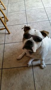 Yep I Am A Rockstar American Bulldog Animals Dogs Bullying
