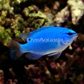 Pin On Our Saltwater Fish