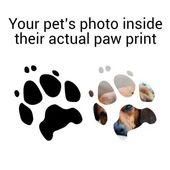3 Möglichkeiten, den Pfotenabdruck Ihres Haustieres zu erhalten