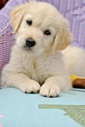 Perrito lindo   perros   El   cachorro   El   mascotas   #puppy #pets biopop.com/   – Tiere