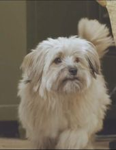 Digby The Dog From Kodaline S All I Want Video I Just Want Digby