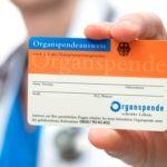 Widerspruch Organspende Organspende Organe Patientenverfugung