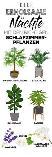 Luftverbesserer: Diese Pflanzen sind super für die Wohnung! – Pflanzen