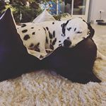 Grey Star Hundekissen Hundebedarf Hunde Kissen