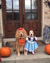 ¡Halloween casi está aquí! 🎃 👻 ¿Crees que ganaremos el mejor premio de disfraces de Halloween?    – Video Hund