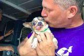 chihuahua puppy mill senio #chihuahua puppy mill senior   – etc