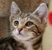 Rafferty Animal Welfare League Animals Kittens