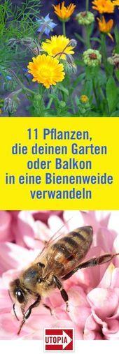 Bienenweide: 11 Pflanzen, die Ihren Garten oder Balkon zu einem Paradies für Bienen machen   – Ideen für den Garten