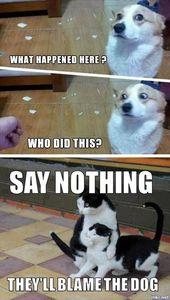 Picdump # 78 de ilikr.net – Gatos   – Hunde Bilder
